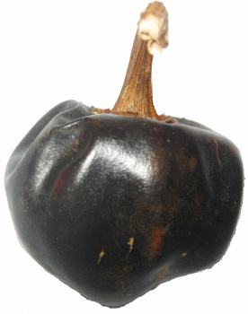 Chili Cascabel