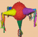 Piñata Red